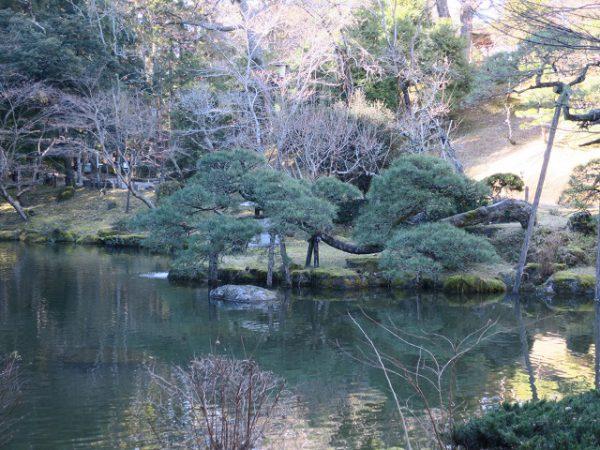 成田山公園 竜樹の池と松の木